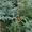 Саженцы деревьев. #1332057