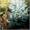 саженцы ели обыкновенной, сибирской, колючей #1575279