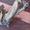 Циклевка,  шлифовка паркета в Астане #1496386