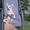 Карликовая овчарка Вельш Корги Пемброк,  любимая порода английской королевы. #1628760