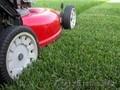 Семена газона,ель голубая-зеленая,сосна,береза и т.д.Тротуарные плитки - Изображение #3, Объявление #1046652