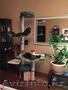 Современные домики для кошек,  когтеточки,  лазалки,  игровые комплексы