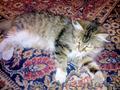 Ищем доброе сердце и дом для кошки