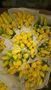 Цветы Голландские Тюльпаны