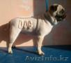 Стрижка кошек и собак без наркоза в Астане