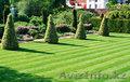 рулонный газон, Объявление #1629120