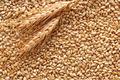 Продам зерновые культуры и продукты их переработки