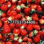 Казахстан Астана Нур-Султан ягоды овощи фрукты сухофрукты варенье доставка ягод