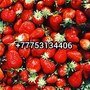 Kazahstan yagody Nursultan Qazaqstan Astana Ovoshy frukty Астана ягоды овощи  Аб