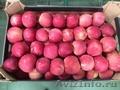 Польские яблоки осенне-зимней линейки от производителя